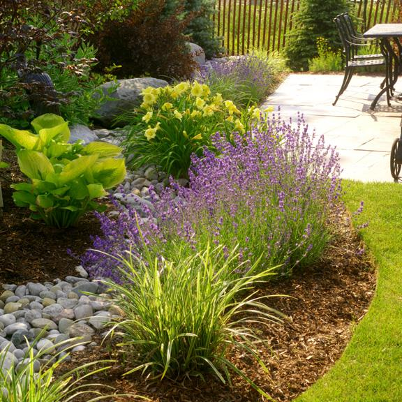 beautiful garden maintenance and new plants