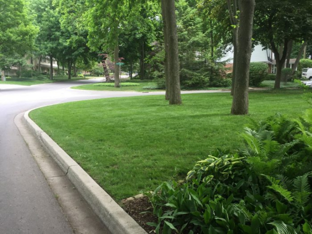 landscaping of green lawn in london ontario