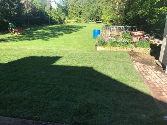 freshly laid grass by nature's image landscaping