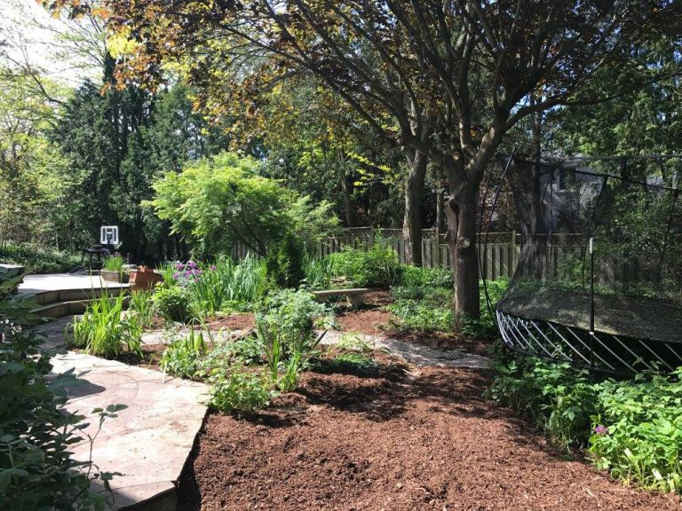 backyard garden maintenance
