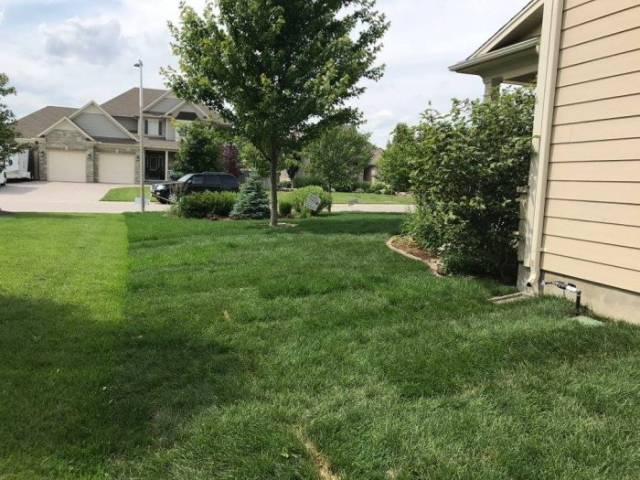 fresh laid green grass in side yard