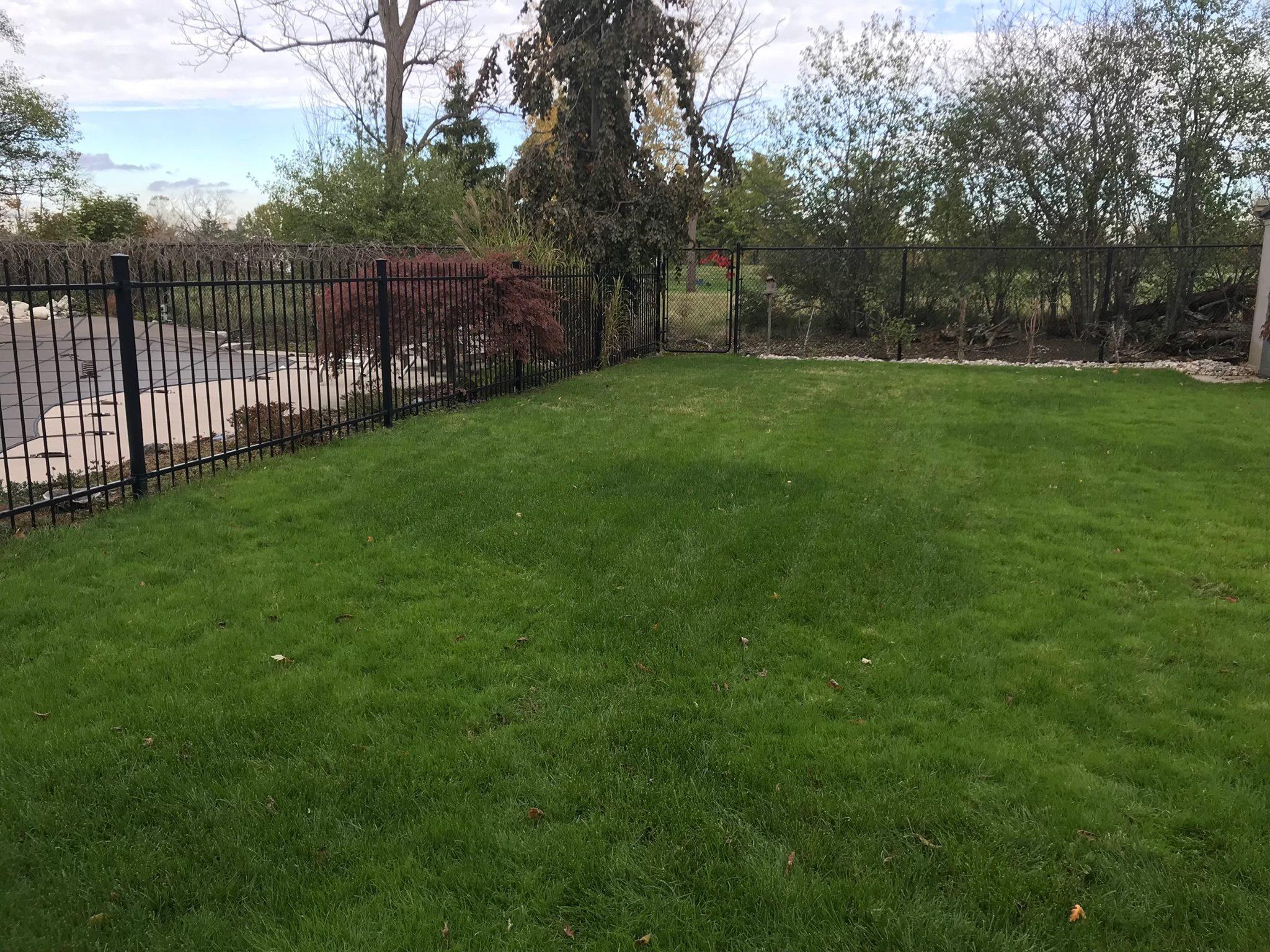 pest free green lawn